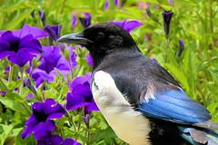 P1010454 (alainazer) Tags: marseille provence france fiori fleurs flowers oiseau bird uccello animal