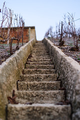 Up-there (ZeGaby) Tags: bokeh champagne marche marne naturephotography pentaxdfa50mm pentaxk1 stairs vigne vignoble vines vineyards aÿchampagne france