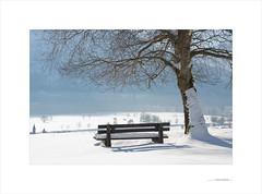 Comienza el espectáculo (E. Pardo) Tags: invierno winter nieve árbol tree schnee snow luz licht light admont steiermak austria