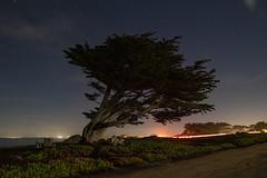 Point Pinos, Pacific Grove, California (rocinante11) Tags: night longexposure pacificgrove california unitedstates tree stars