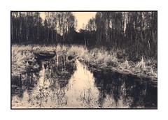 Dintelse Gorzen (gelelie / Gerda) Tags: nikonfe foma131 sepiase1 omega hp5push