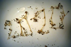 2020 for future (fotomie2009) Tags: smileonsaturday 2020 numbers new year wishes auguri numeri seeds semi prezzemolo parsley flora