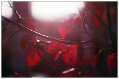red (Christos Theofilogiannakos) Tags: nikonf60 afnikkor1850d truprint400 expiredfilm 35mm film