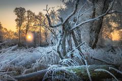 frosty sunrise (Hans Zitzler) Tags: sunrise morning frozen river sun nopeople cold bavaria bubach oberpfalz saukalt ngc