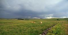 Aubrac (Yvan LEMEUR) Tags: aubrac lozère nuages météorologie orage pluie tempspluvieux prairie pastoralisme elevage clôture muret muretdepierressèches vaches extérieur landscape paysage france immensité solitude grandsespaces