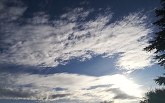 Nice clouds (daveandlyn1) Tags: clouds somebluesky sky trees folige smartphone frommybackyard lookingup imagetakenwithahuaweip8 huaweip8 pralx1 p8lite2017 psdigitalcamera cameraphone