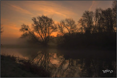 Riverside Willows.. (Picture post.) Tags: green nature water sunrise reflections landscape willow winter mist clouds paysage arbre brume