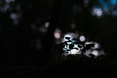 Autumn Silhouette (Theo Crazzolara) Tags: silhouette autumn contrast nature natural light bokeh macro closeup luck lucky hiking black dark plants growing growth stilllife forest