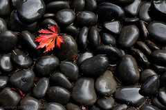 Autumn Zen (pdxsafariguy) Tags: autumn fall wet stone oregon garden portland japanese japanesegarden leaf natural foliage zen serene red usa maple rocks stones pacificnorthwest tomschwabel