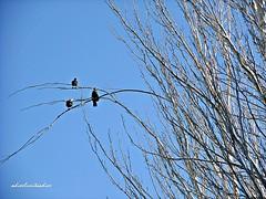 Conversaciones de altura 028 (adioslunitaadios) Tags: pájaros airelibre fujifilm árboles nubes