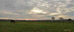 Klompenpad wandeling Doesburgermolenpad.(2) (Cajaflez) Tags: horse paard fence hek trees bomen klompenpad doesburgermolenpad