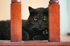 Sean 001 (commontropes) Tags: sonya7rii sony a7rii alpha lensbaby 35mm burnside35 burnside cat cats