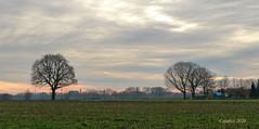 On a walk near Ede (Cajaflez) Tags: klompenpad trees bomen sihouettes silhouettten ede thenetherlands sky lucht coth5 sunrays5 doesburgermolenpad