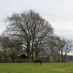 Klompenpad wandeling Doesburgermolenpad. (Cajaflez) Tags: doesburgermolenpad ede gelderland horse paard house fence hek trees bomen winter klompenpad