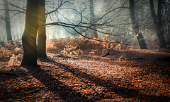 Love the trees until their leaves fall off. Then encourage them to try again next year (Ingeborg Ruyken) Tags: ochtend morning sunrise 500pxs natuurmonumenten boxtel natuurfotografie autumn fall kampina herfst