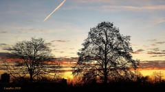Zonsopgang gezien vanaf mijn zolderraam. - Sunrise seen from my attick window. (Cajaflez) Tags: zonsopgang sunrise trees bomen bare kaal els silhouetten silhouettes moseik austrianoak quercuscerris alder alnus