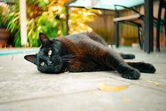Don 001 (commontropes) Tags: sonya7rii sony a7rii alpha lensbaby 35mm burnside35 burnside cat cats