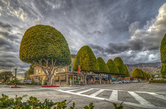 Downtown Fairyland (Michael F. Nyiri) Tags: glendoraca trees ficustrees california southerncalifornia