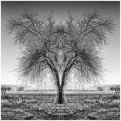 For Symmetry Lovers... (Ody on the mount) Tags: abstrakt anlässe bäume em5iii kunst landschaft mzuiko124028 omd olympus pflanzen silhouette wanderung abstract art bw landscape monochrome noclouds photoshop sw savingtheclimatebytrees trees