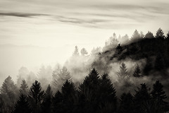 Smoky Forest (Role Bigler) Tags: baum emmental fujifilm fujifilmxpro3 landschaft minolta minoltamctelerokkorpf128135mm mist natur nebel rokkor tree clouds fog forest landscape manfrotto monochrome nature nilssilverefexpro2 schweiz sepia silverefexpro2 smoke suisse svizzera switzerland wald wood