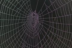 Minutissime (lincerosso) Tags: ragnatela ragno spider gocce acqua warwe nebbia condensa gioielli bellezza armonia