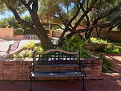 Pleasant Courtyard 🌳 Bench Under Olive Tree (Chic Bee) Tags: appleiphone7plus inthecourtyardoftheking👑 menuchahv'nachalah restandrelaxation brick olivetree courtyard bench