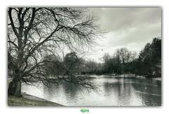 GENT / HET CITADELPARK (régisa) Tags: parc gand gent belgique belgië citadelpark citadelle arbre baum boom tree