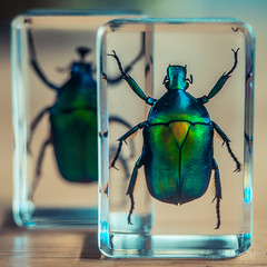 Those who do not think outside the box are easily contained (Peter Jaspers) Tags: frompeterj© 2019 olympus zuiko omd em10 1240mm28 macromondays contained beetle resin hars kever colors home scarabee 500x500 square