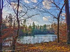 (Z. Andrzejewski) Tags: poland warmianmasurian olsztyn andrzejewski tree nature autumn fall outdoor forest woodland river wadag
