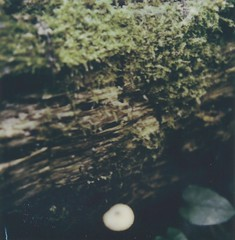 """Growing (dreamscapesxx) Tags: instant polaroid """"polaroidoriginals"""" polavoid snapitseeit moss bark tree fungi atthepark trail growing michigan """"polaroidslr680"""" """"polaroidoriginals600film"""""""