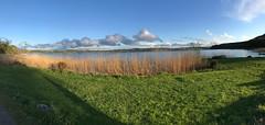Sweden 2019 (claudia.schillinger) Tags: schweden sweden sverige göteborg gothenburg lerum aspenäs herrgard suède evening kväll abend soir sunset sonnenuntergang solnedgång sonne sun sol soleil see lake lac sjö natur nature gräser