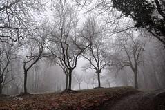 Squelettes dans le brouillard givrant (Nathery Reflets) Tags: brouillard givre hiver saison arbre rosenwiller basrhin 67 alsace grandest winter frost fog paysage nature campagne nebel natur landschaft france