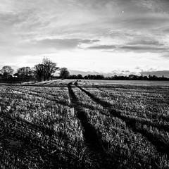 træmˌlaɪn (PJT.) Tags: sefton lydiate merseyside lancashire tramline stuble moon sky silhouette farmland agriculture wet harvested trees farm leading line