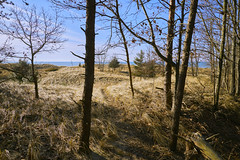 025386a  Where The Woods And Dunes Give Way To The Beach And Lake Michigan (David G. Hoffman) Tags: lake lakeshore lakemichigan beach beachgrass trees dunes wind