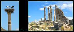 Volubilis  Le Capitole 1/6 (philippedaniele) Tags: maroc meknes fes volubilis vestiges vestigesromains acropole temple cigognes