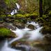 Todd Creek #1
