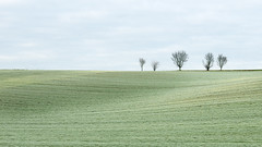 Field with Trees (Bernd Walz) Tags: trees field hoearfrost space vastness minimalistic minimalism landscape rural countryside fineart transformedlandscape artificiallandscape manfacturedlandscape agriculture