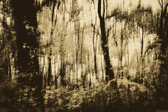 Visions of a dark forest (Peter Szasz) Tags: calm canon 80d wideangle wide wood wooden trees fall forest branches brown bright dark black blackwhite shadows sepia autumn outside outdoors october bark art abandoned abstract blurred vision bush magyarország debrecen hungary creative creepy dreamy dream distant landscape leaves leaf colorless longexpo 2470