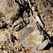 Sandstone injectite in granite (Tava Sandstone in Pikes Peak Granite, Proterozoic; west of Woodland Park, Colorado, USA) 14