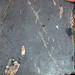 Sandstone injectite with granite pebbles (Tava Sandstone, Neoproterozoic; west of Woodland Park, Colorado, USA) 2