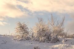 Joli rayon de soleil (AnneLise Pollet) Tags: canon7dmarkii neige hiver maurienne savoie