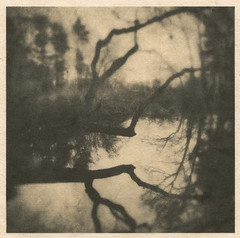 Lagoon, Saugus River #4 (LowerDarnley) Tags: washi goldleaf alternativeprocess alternativedigitalprint saugusriver lagoon branch limb shadow reflection woods river localwoods saugus ma breakheartreservation