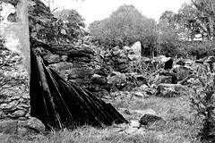 Ruined farmhouse 03 (Photographs by Ged Hynes) Tags: slates drystone wall ruin farmhouse north wales