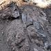 Sandstone injectite in granite (Tava Sandstone in Pikes Peak Granite, Proterozoic; west of Woodland Park, Colorado, USA) 9