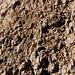 Sandstone injectite in granite (Tava Sandstone in Pikes Peak Granite, Proterozoic; west of Woodland Park, Colorado, USA) 25