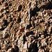 Sandstone injectite in granite (Tava Sandstone in Pikes Peak Granite, Proterozoic; west of Woodland Park, Colorado, USA) 24