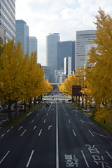 nagoya21839 (tanayan) Tags: urban town cityscape aichi nagoya japan nikon v3 road street alley 愛知 名古屋 日本 sakura 桜通 銀杏 tree ginkgo autumn leaves