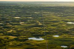 The Straight and Narrow (TigerPal) Tags: saskatchewan sask plains prairie aerial birdseye cessna dirthills avonlea claybank road gravelroad glacialmoraine glacialtill hills