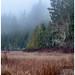 fog at the marsh...