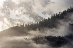 Moody Mountain Layers (s.d.sea) Tags: pentax k5iis k5ii pnw pacificnorthwest washington washingtonstate wa mountains morning mountain mist misty fog foggy cloudy clouds ridge tree trees mood moody hiking hike telephoto cascades north bend winter january